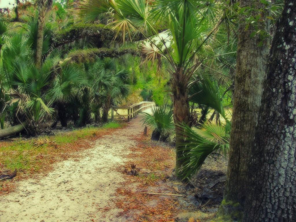 Myakka Trail